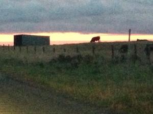 Gazing upon grazing...